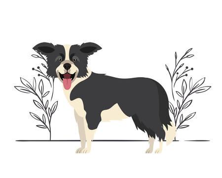Lindo perro border collie sobre fondo blanco, diseño de ilustraciones vectoriales