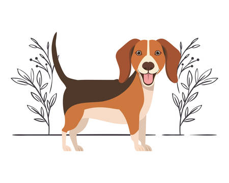 cute beagle dog on white background vector illustration design Фото со стока - 129790830