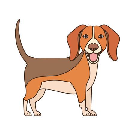 cute beagle dog on white background vector illustration design Фото со стока - 129791353