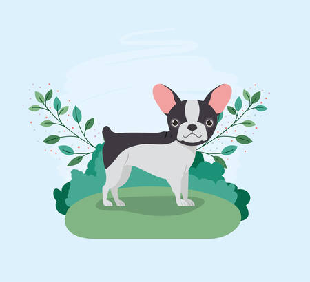 cute french bulldog pet in the camp vector illustration design