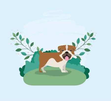 cute bulldog dog pet in the camp vector illustration design