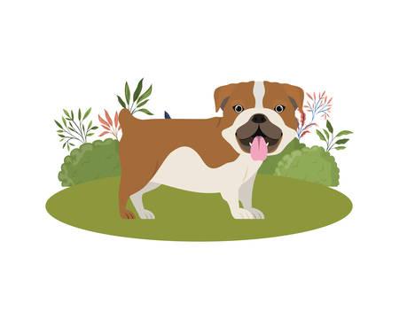 cute bulldog ingles dog on white background vector illustration design Ilustração