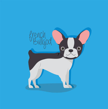 cute french bulldog pet character vector illustration design