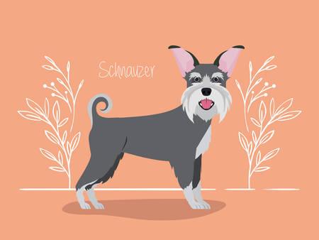 cute schnauzer dog pet character vector illustration design Çizim