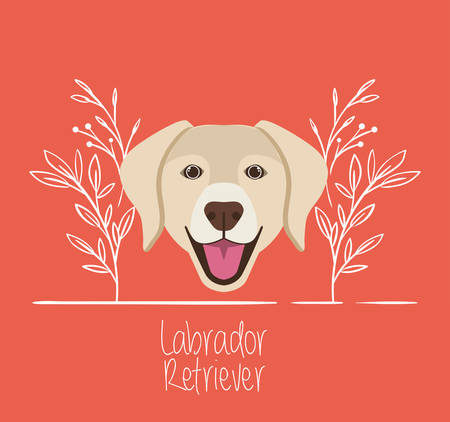 cute labrador retriever dog pet head character vector illustration design Çizim