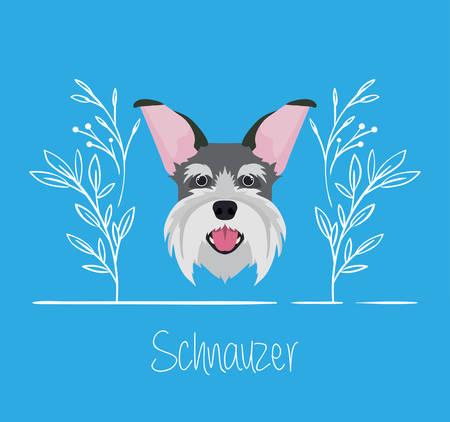 cute schnauzer dog pet head character vector illustration design