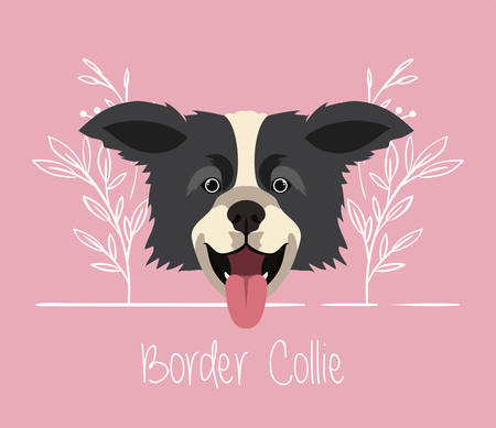 cute border collie dog pet head character vector illustration design