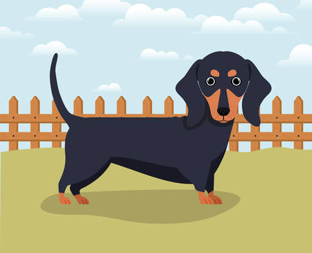 cute dashhund dog pet in the camp vector illustration design