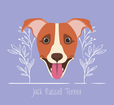 cute jack russell terrier dog pet head character vector illustration design
