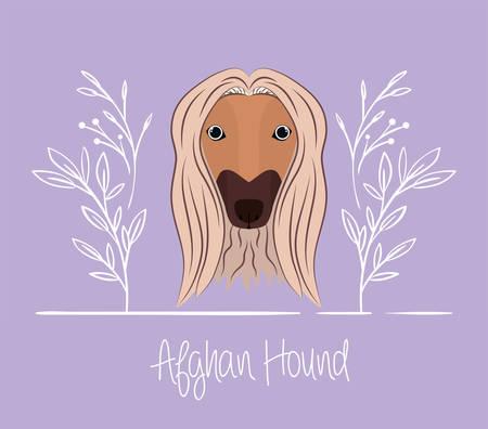 cute afghan hound dog pet head vector illustration design