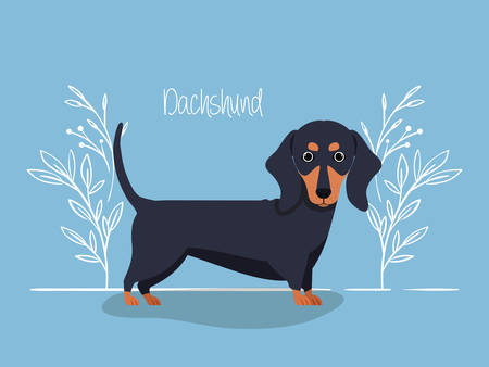 cute dashhund dog pet character vector illustration design