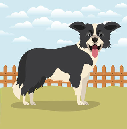 cute border collie dog pet in the camp vector illustration design Çizim