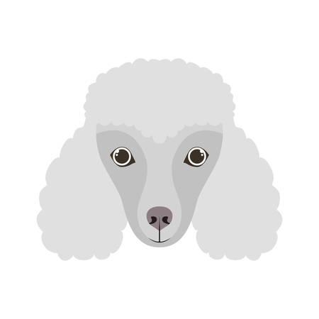 head of cute poodler dog on white background vector illustration design