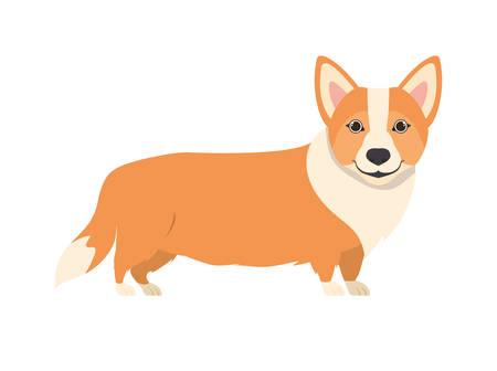 cute welsh corgi dog on white background vector illustration design vector illustration design