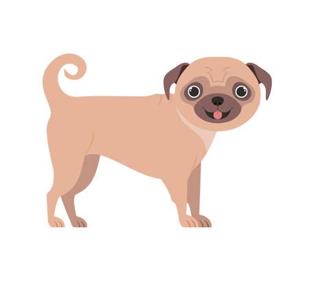 cute pug dog on white background vector illustration design Ilustração