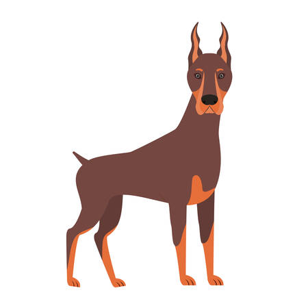 cute doberman dog on white background vector illustration design