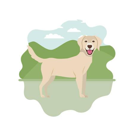 cute labrador retriever dog on white background vector illustration design Ilustração