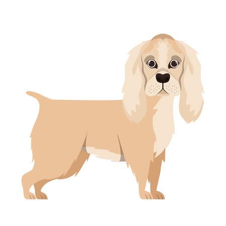 cute cocker spaniel ingles dog on white background vector illustration design