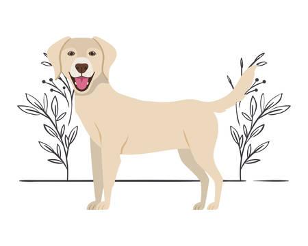 cute labrador retriever dog on white background vector illustration design 일러스트