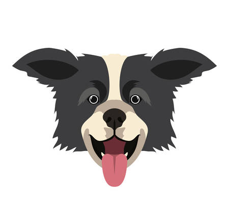 head of cute border collie dog on white background vector illustration design