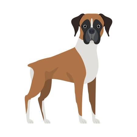 cute boxer dog on white background vector illustration design