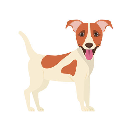 cute jack russell rerrier dog on white background vector illustration design Stock Illustratie
