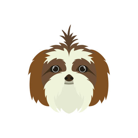 head of cute shih tzu dog on white background vector illustration design
