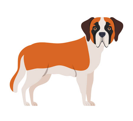 cute san bernardo dog on white background vector illustration design Stock Illustratie
