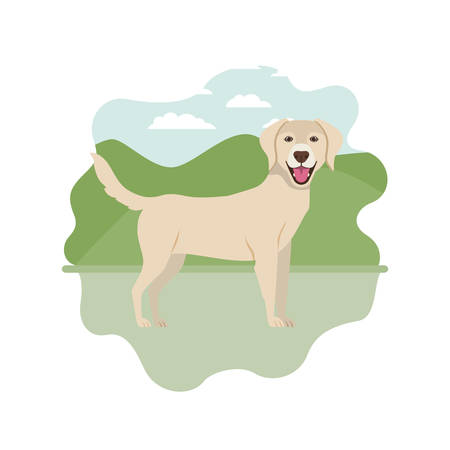 cute labrador retriever dog on white background vector illustration design Stock Illustratie
