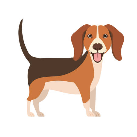 cute beagle dog on white background vector illustration design