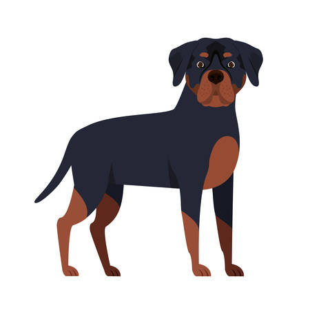 cute rottweiler dog on white background vector illustration design Stock Illustratie