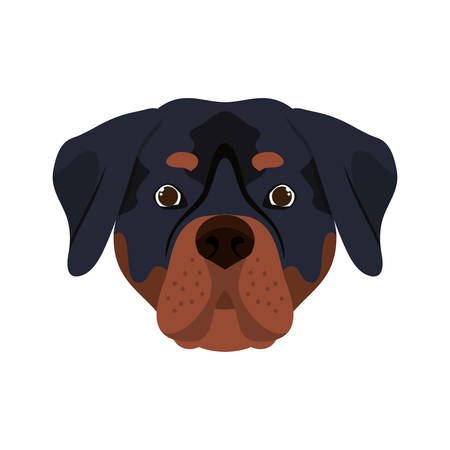 head of cute rottweiler dog on white background vector illustration design Stock Illustratie