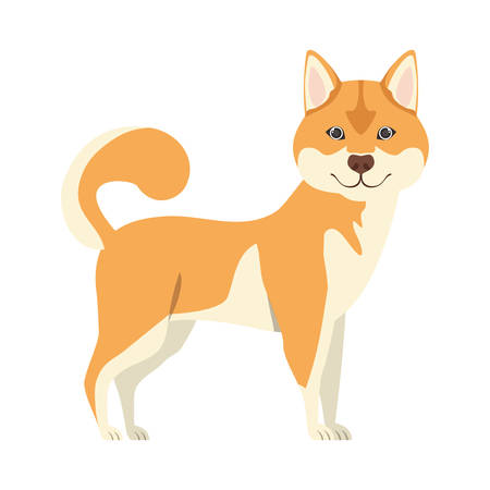 cute akita inu dog on white background vector illustration design