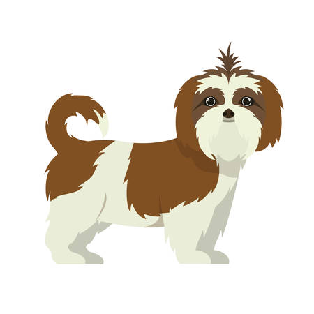 cute shih tzu dog on white background vector illustration design
