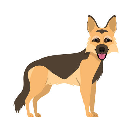 cute pastor aleman dog on white background vector illustration design