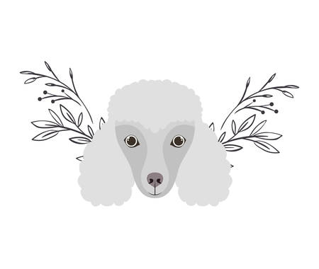 head of cute poodler dog on white background vector illustration design