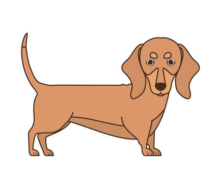 cute dachshund dog on white background vector illustration design Banque d'images - 130686583