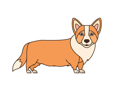 cute welsh corgi dog on white background vector illustration design vector illustration design Banque d'images - 130686593