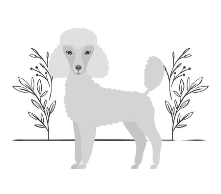 cute poodle dog on white background vector illustration design Banque d'images - 130686591