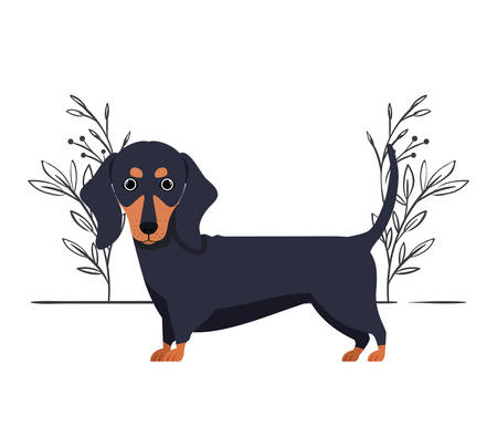 cute dachshund dog on white background vector illustration design Banque d'images - 130686909