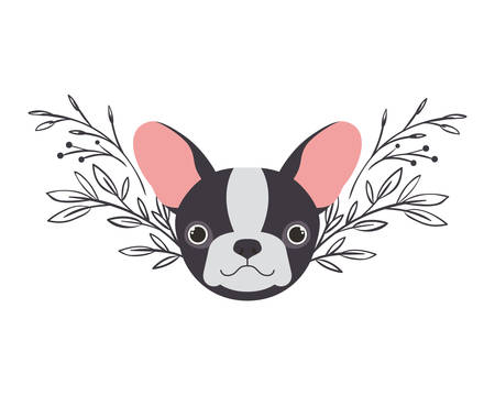 head of cute boston terrier dog on white background vector illustration design Banque d'images - 130686919