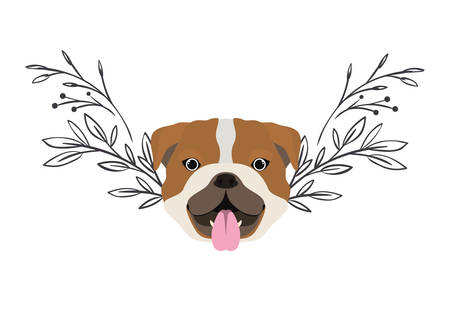 head of cute bulldog ingles dog on white background vector illustration design Banque d'images - 130686928