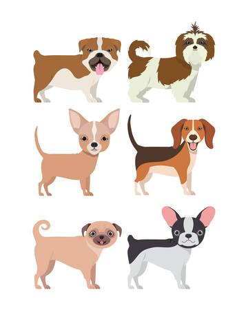 bundle of dog breeds group vector illustration design