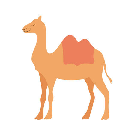 cute camel animal character vector illustration design