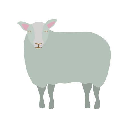 cute sheep manger animal character vector illustration design Ilustrace