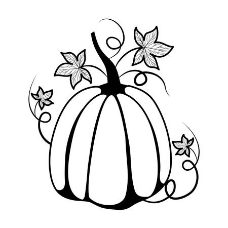 Pumpkin design, Fruit autumn healthy organic food sweet and nature theme Vector illustration 스톡 콘텐츠 - 134050272