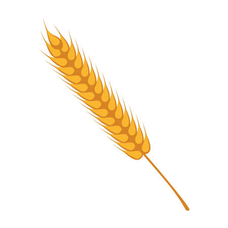 wheat spikes decoration isolated icon vector illustration design