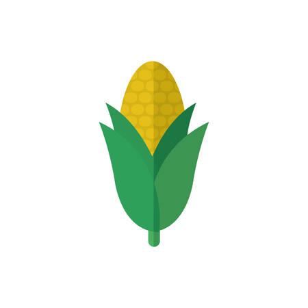 Corn design, Food vegetable agriculture green plant maize cob and organic theme Vector illustration Ilustração