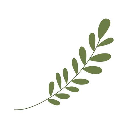 leaf icon design, Plant floral garden nature decoration ornament and season theme Vector illustration