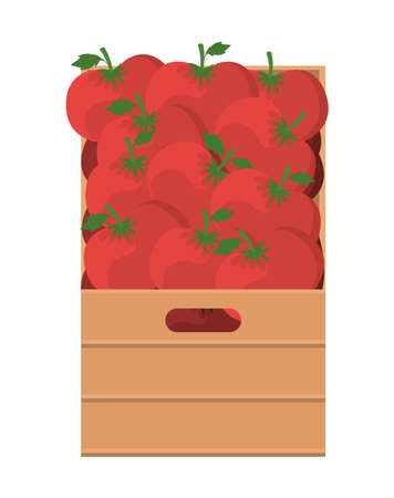tomatoes inside box design, Vegetable organic food healthy fresh natural and market theme Vector illustration